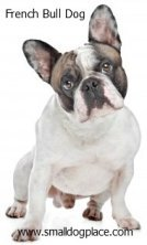 French Bull Dogs are a good choice for families with children