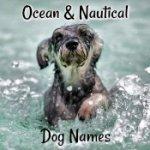 Nautical Dog Names