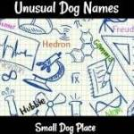 Unusual Dog Names Based on Math and Science