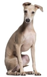 Greyhound Names