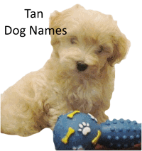 Tan dog names link