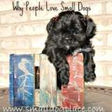 Find out why people love little dogs