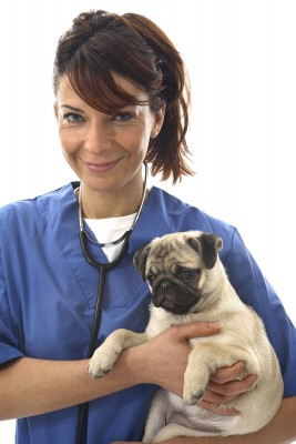Many types of puppy diarrhea require veterinary treatment.