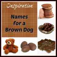 Names for a Brown Dog