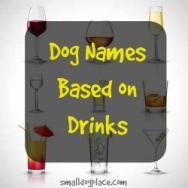 Dog Names Based on Drinks