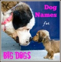 Dog Names for Big Dogs