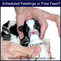 Free Feeding or Scheduled Meal Times?