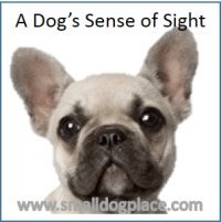 A dog's sense of sight
