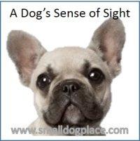 A dog's sense of sight