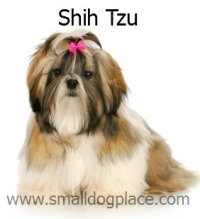 Shih Tzu:  Small Dogs that are good with Children
