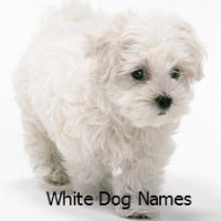 Puppy Names A To C