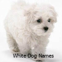List of Black and White Dog Names perfect for any dog with black and white hair.