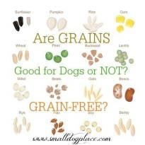 Myths About Grain Free Dog Food