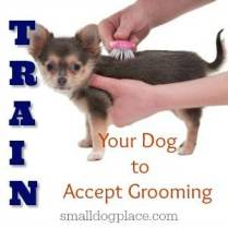 Train Your New Puppy to Accept Grooming