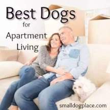 Best Dogs for Apartment Living