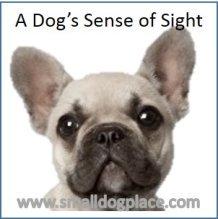 Dog's Sense of Sight