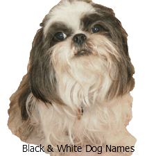 Names for a Black and White Dog