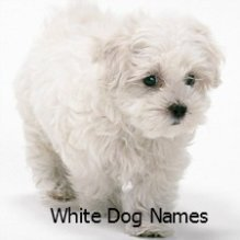 Names for a White Dog