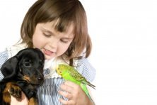A Little Girl is Holding a puppy and a bird.