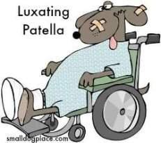 Patellar Luxation
