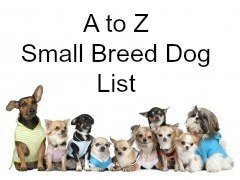 List Of Small To Medium Dog Breeds