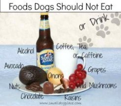 Foods Toxic to Dogs