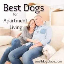 Best Dog Breeds for People who live in Apartments.