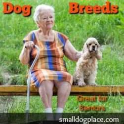 Dog Breeds Good for Seniors