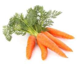 Vegetables for Dogs:  Carrots