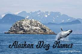 Alaskan Dog Names
