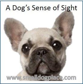 Dogs Sense of Sight