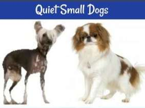 Don't like noisy dogs?  Check out these quiet breeds.