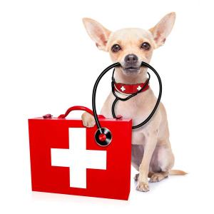 Safety resources for small dog owners