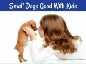 Best small dogs that are good with kids.