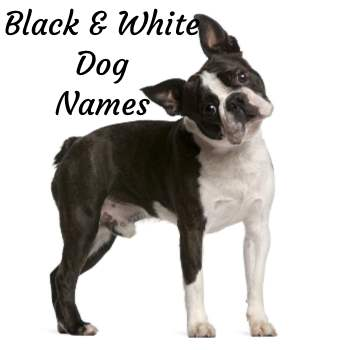 Dog Names by Color:  Black and White Dog Names