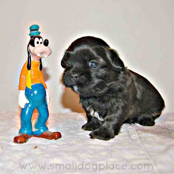 Amazing Maltese Chubby Adorable Dog - 301xNxdisney-dog-names-boys2  Pic_16946  .jpg