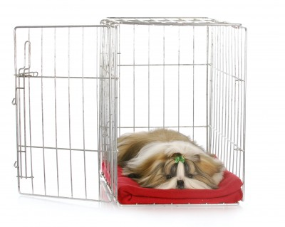 Housebreaking a small dog;  crate training
