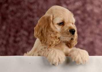 Girl Puppy Names