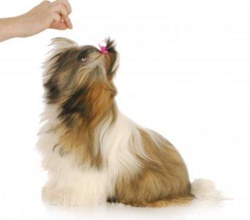 DIY Dog Training Tips