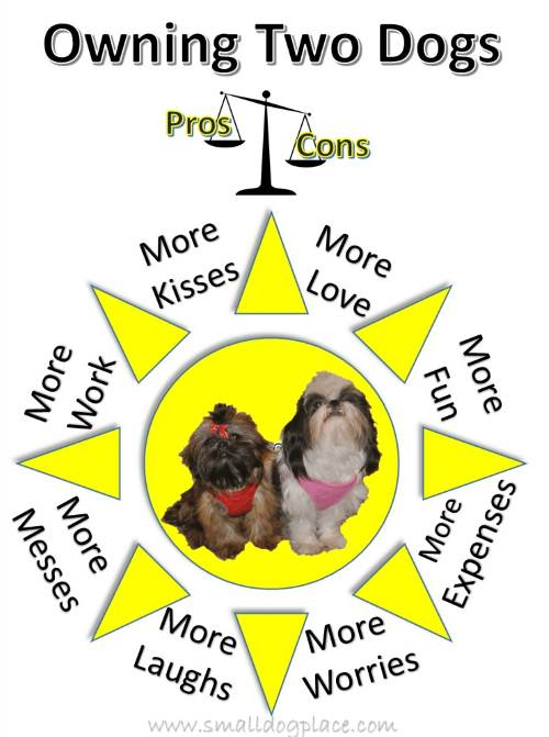 Pros and Cons of a second dog