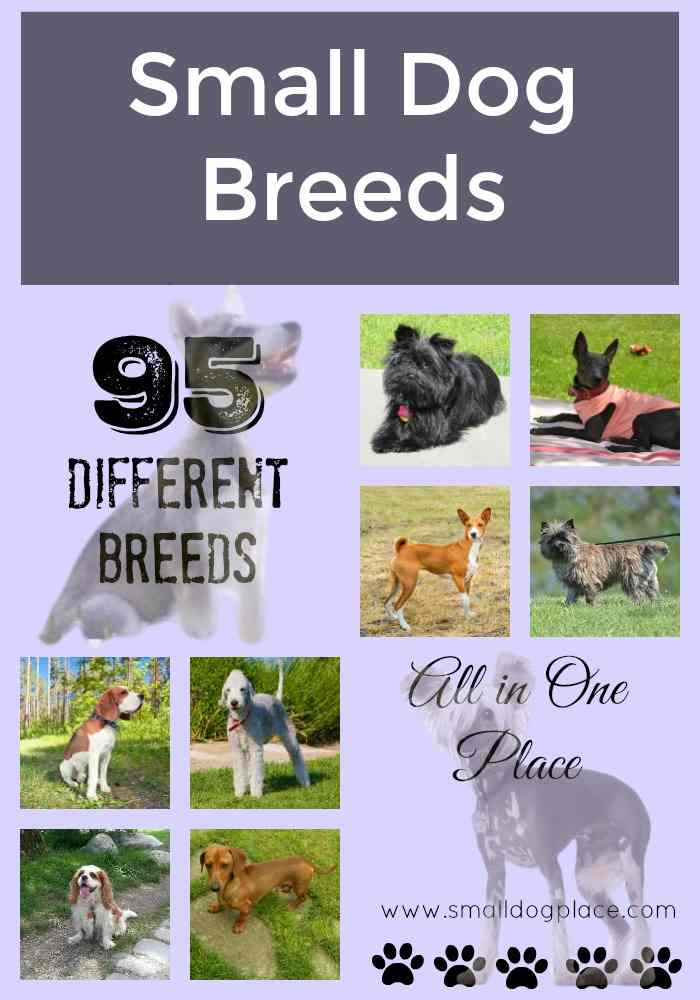 All Small Dog Breed List From A To Z With Pictures Descriptions