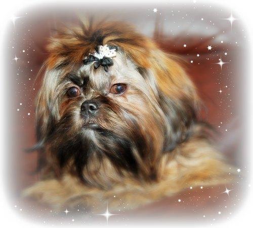 Dog Photography:  Header Image