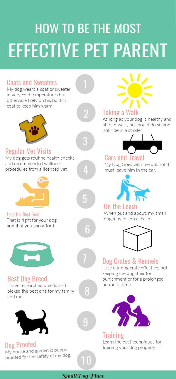 How to Be the Most Effective Pet Parent Infographic
