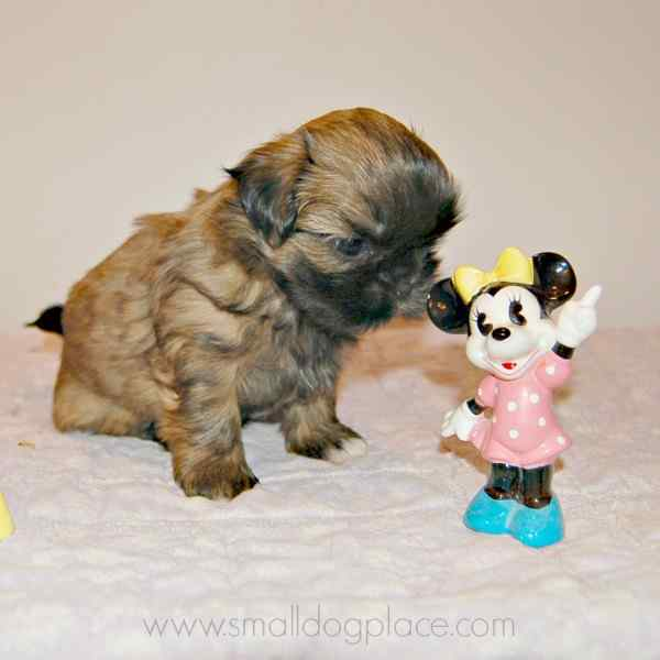Disney Dog Names For Girls For All You Mickey Fans