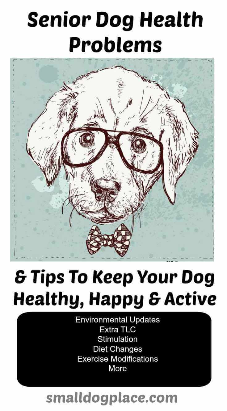 Senior Dog Health Tips