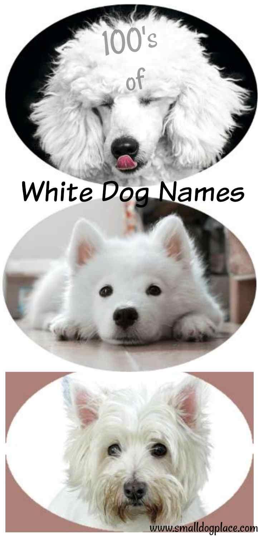 Giant list of White Dog Names