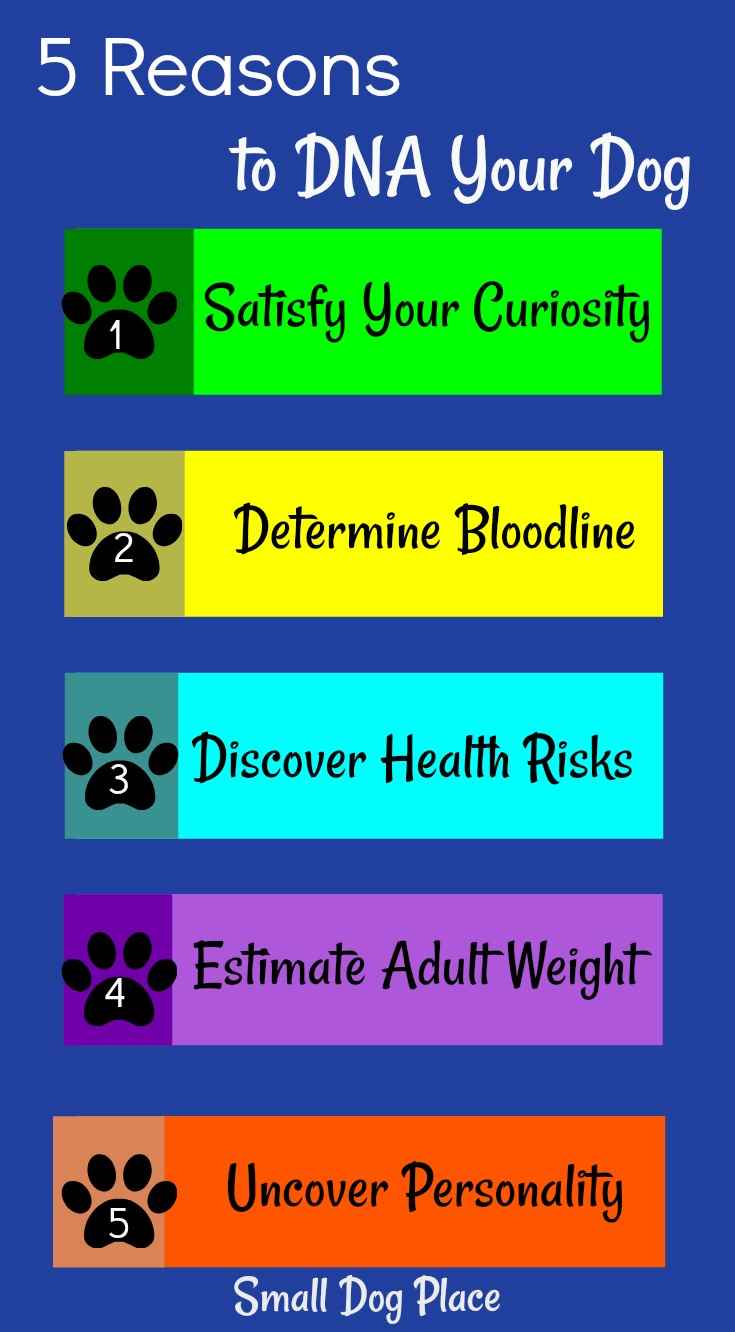 5 Reasons to DNA Your Dog | Small Dog Place