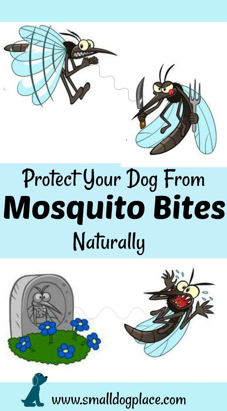 Learn how to deal with mosquito bites on dogs