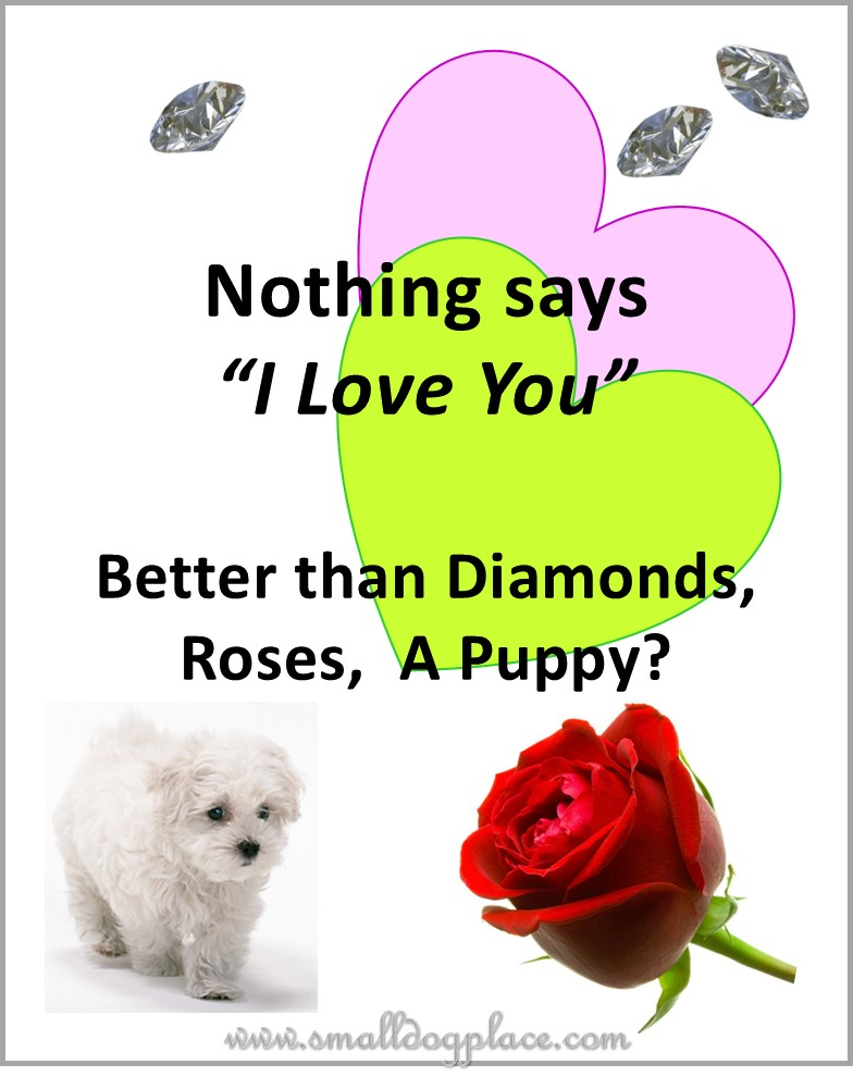 Puppies as Gifts:  Nothing Says I Love You Better than Diamonds, Roses, a Puppy?