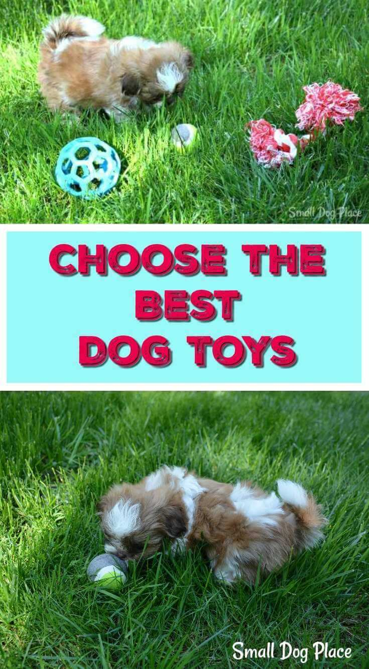 The Best Dog Toys Regardless of Breed, Pin